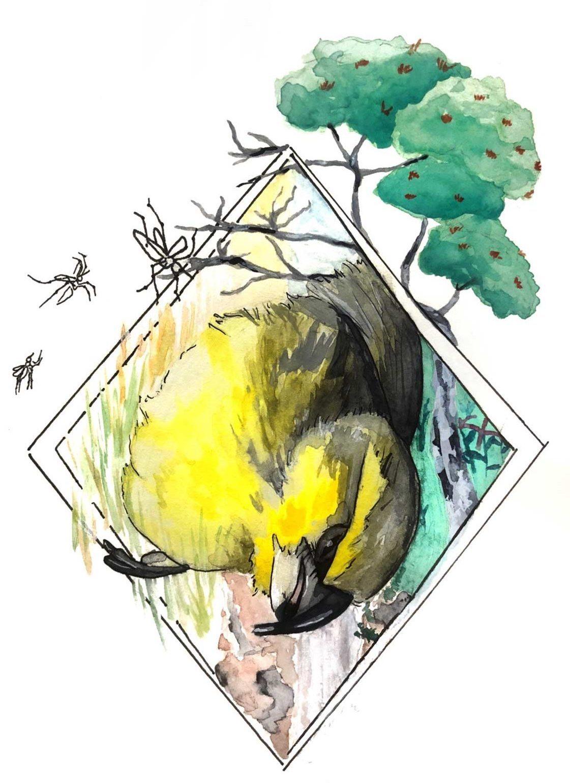 ariana-loehr-bird-web