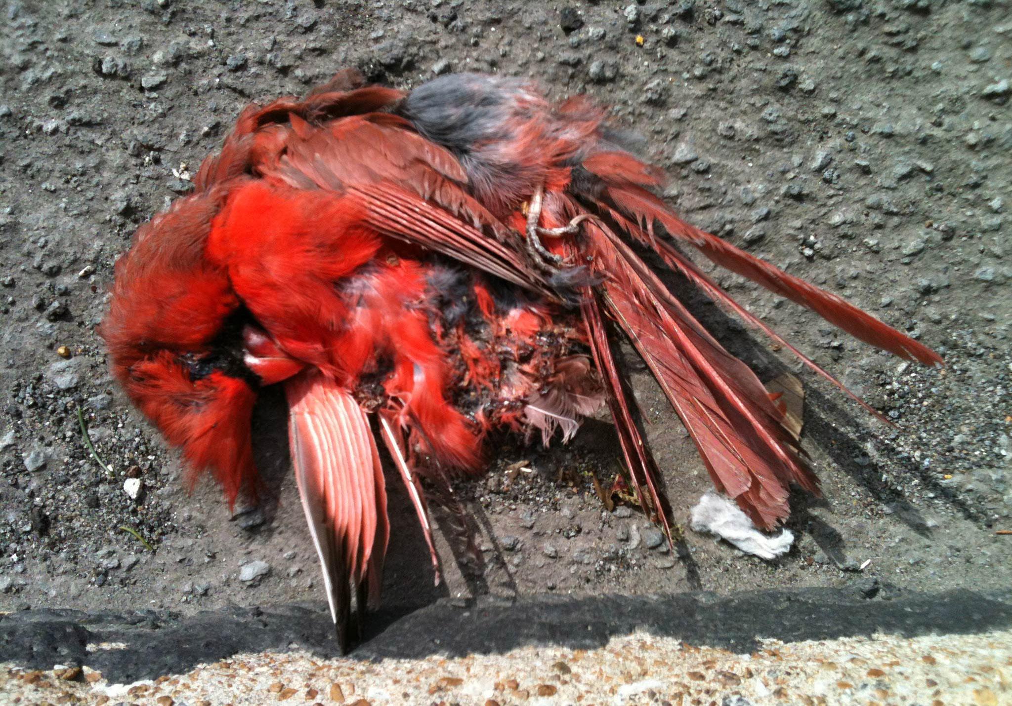 cardinal02-web 2